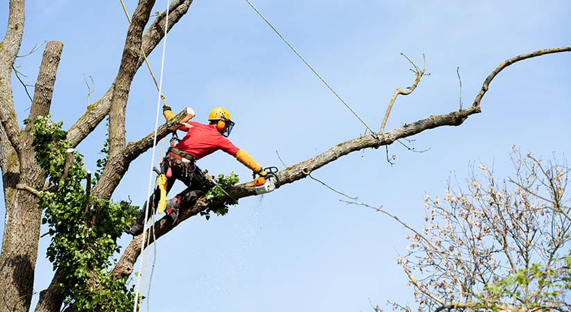 Types of tree services out there