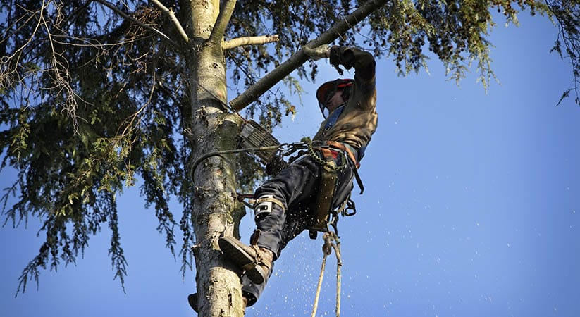 5 Things To Know When Hiring An Arborist